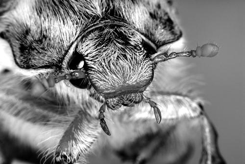 Foto kopf insekt kreuels