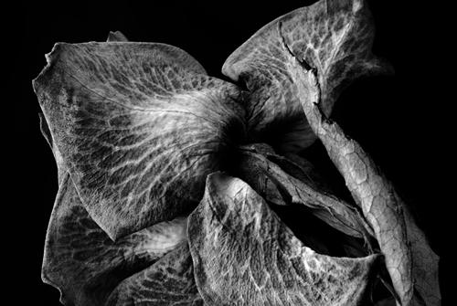Naturfoto: Blätter von Dr. Martin Kreuels